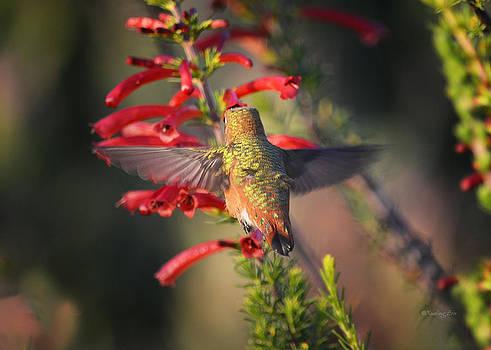 Xueling Zou - Hummingbird in Flight 1