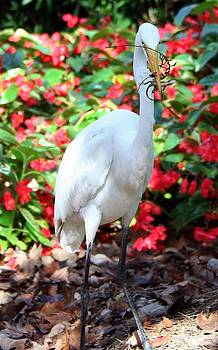 Hungry Egret  by Denise Moore