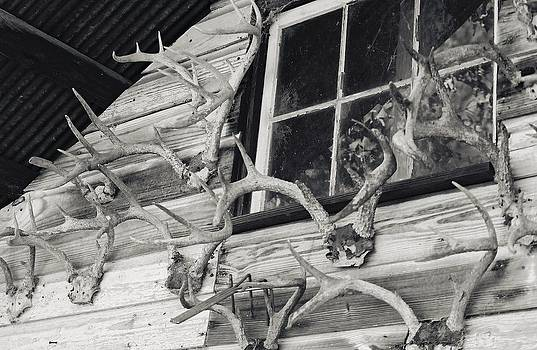 Hunters Deer Horns on Shed by Floyd Smith