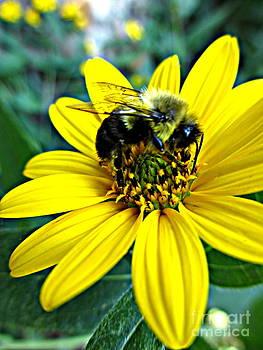 I Love Pollen by Maria Scarfone