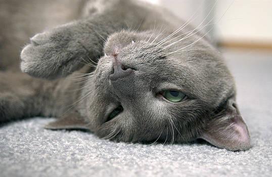 James Steele - I Love To Sleep On My Back