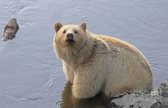 I'm a Cool Bear by Pam Mullins