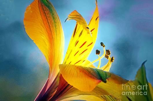 I'm Walking On Sunshine... by Tanya Tanski