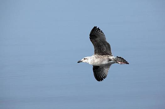 Karol  Livote - In Flight