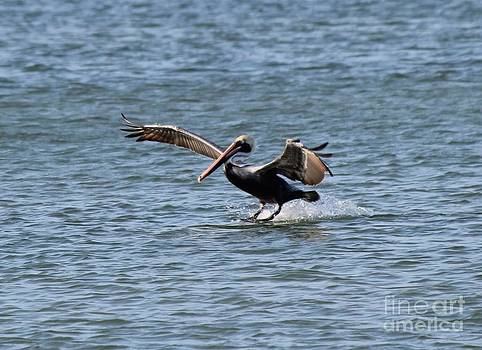 In for a Landing by Theresa Willingham