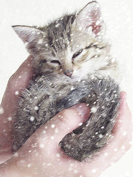 In Safe Hands II by Amy Tyler