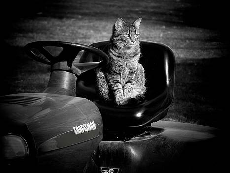 In the Drivers Seat by Linda Francis