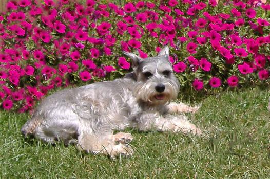 In the Garden by Diane Ferguson
