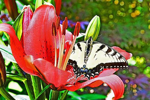 In the Garden by Susan Leggett