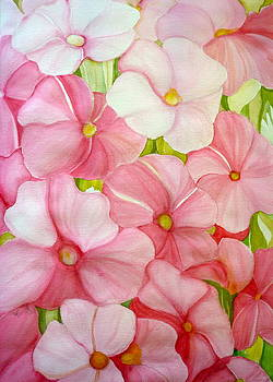 In the pink by Margaret Pirrouette