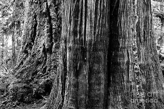 In The Wood by Michael Wyatt