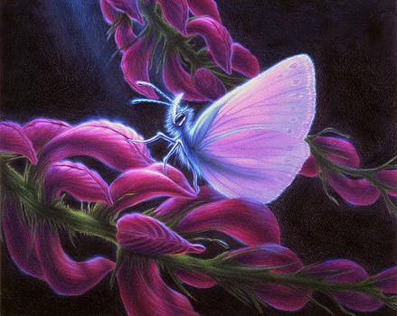 Inapertwa simple creatures by Shawn Kawa