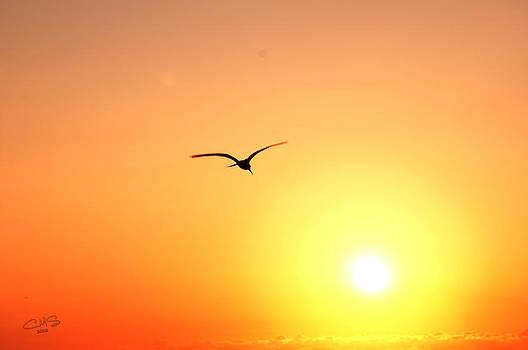 Into the Sun by Christine Stonebridge