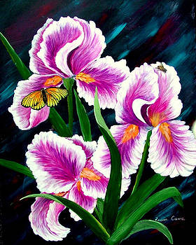 Iris and Insects by Fram Cama