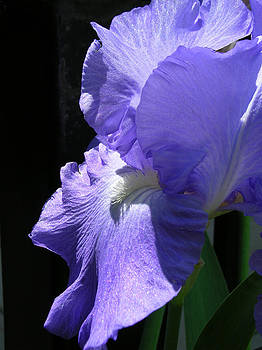 Iris of my Eye by Alan Rutherford