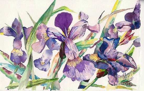 Iris Relief by David Ignaszewski