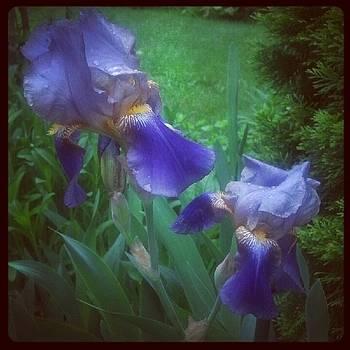 Iris Twins by Christy Bruna