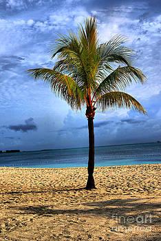 Island Tree by Nancie DeMellia
