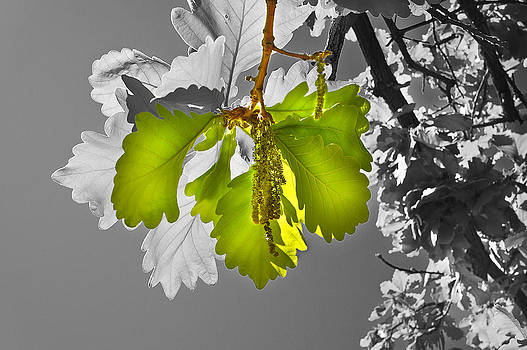 It's Spring by Mariola Szeliga
