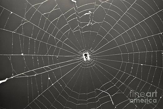 Itsy Bitsy Spider by Leslie Leda