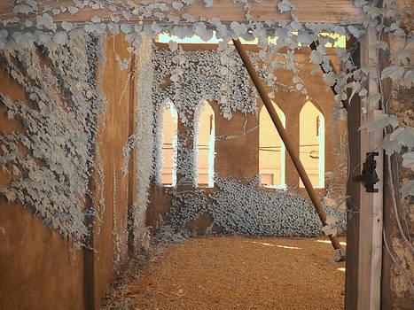 Ivy Walls by Jane Linders