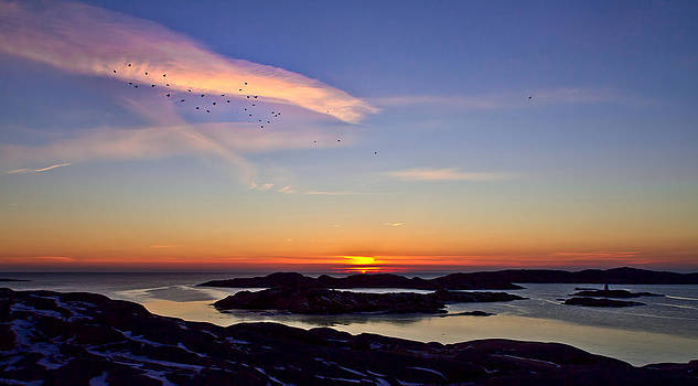 Jackdaws in the sunset by Syssy Jaktman