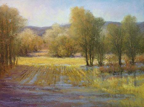 January Rains by Paula Ann Ford