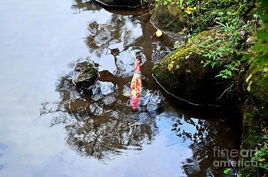 Dean Harte - Japanese Koi Pond