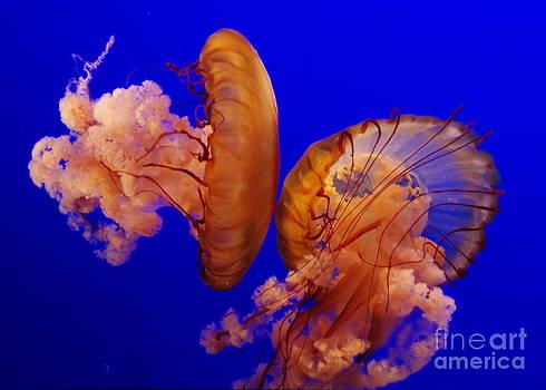 Jellyfish Friends by Gwendolyne Allen