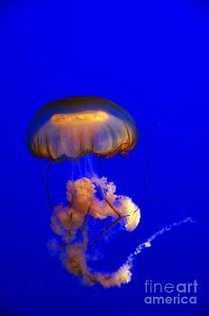 Jellyfish Night Light by Gwendolyne Allen