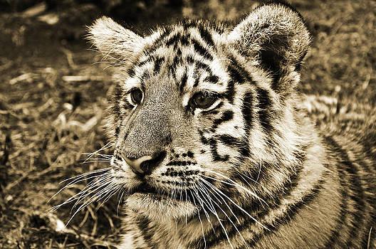 Jungle Cat by Christine Stonebridge