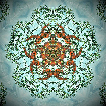 Kaleidoscope Leaves 2 by Heather  Hubb
