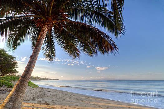 Kihei Maui Hawaii Sunrise Coconut Palm  by Dustin K Ryan