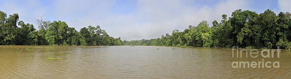 Sami Sarkis - Kinabatangan River