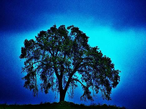 King Oak by Helen Carson