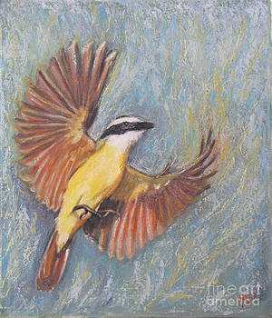 Kiskadee in flight by Judith Zur