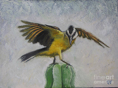 Kiskadee on cactus by Judith Zur