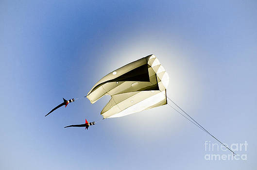 Kite and the sun by David Lade