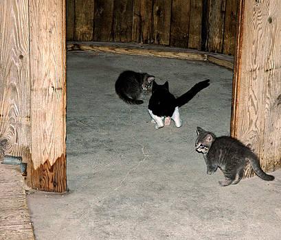 LeeAnn McLaneGoetz McLaneGoetzStudioLLCcom - Kitten Fight