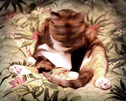 Kitty Says No by Tom Buchanan
