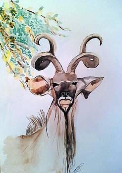 Kudu bull I. by Paula Steffensen