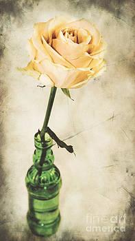 Angela Doelling AD DESIGN Photo and PhotoArt - La rose