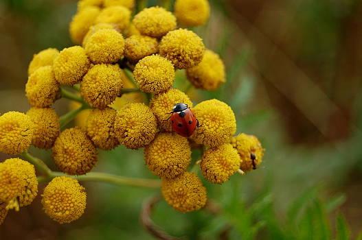 Ladybird by Lenka Kendralova