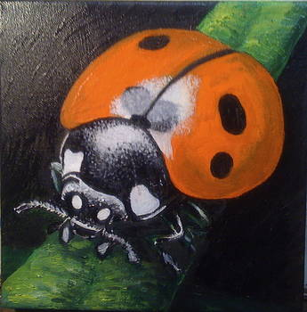 Ladybugs are Lucky by Jeff Arcel
