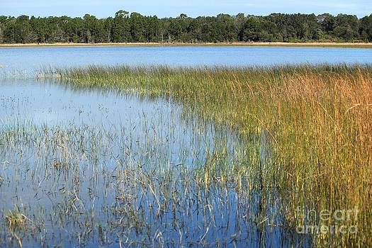 Lake Grass by Theresa Willingham