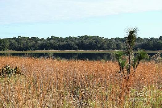 Lake Rogers in Late Fall by Theresa Willingham