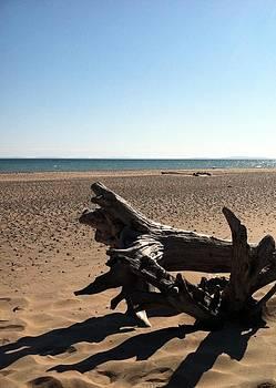 Michelle Calkins - Lake Superior Driftwood
