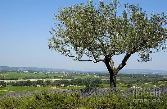 BERNARD JAUBERT - Landscape of Provence. France