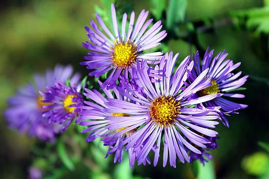 Last Bloom by Sheryl Burns