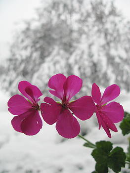 Last Flower by Barbara Ferreira